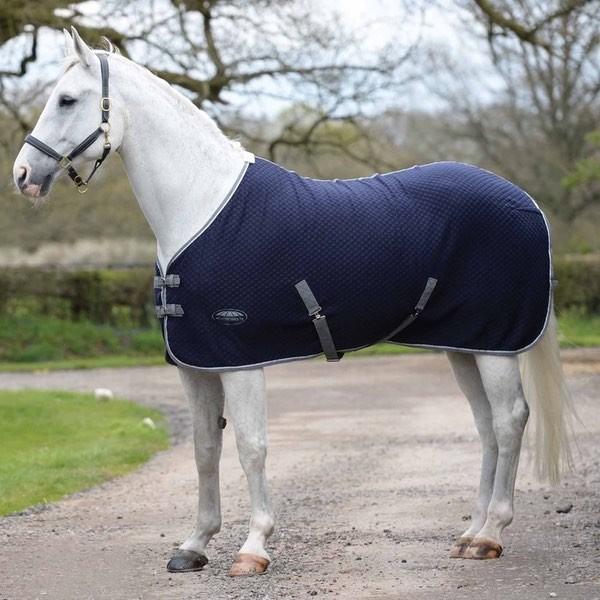 SALE - Equestrian