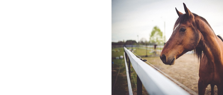 livestock & equestrian fencing