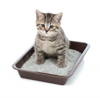 Cat Litter, Trays & Disposal
