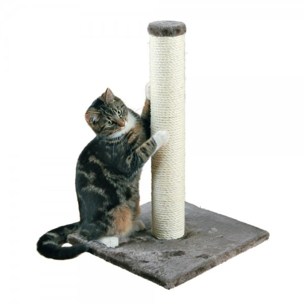 Cat Toys & Scratching Posts