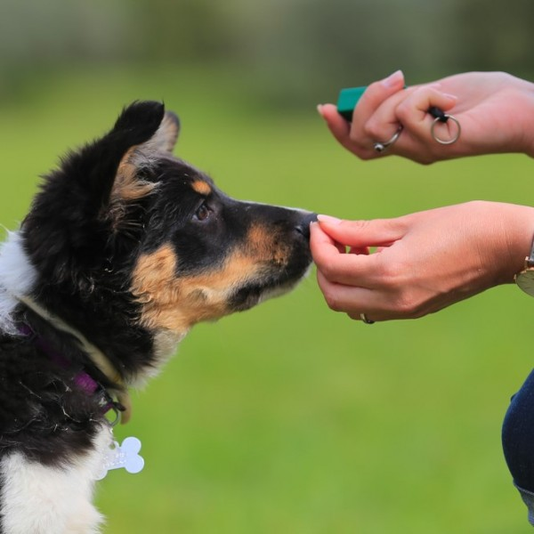 Dog Training & Waste Bags